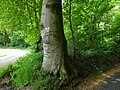 Bedburg-Hau Moyländer Allee 2-4 LSG Moyländer Wald PM18-01.jpg