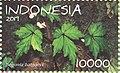 Begonia baloyi 2019 stamp of Indonesia.jpg