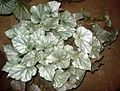 Begonia plant 6.JPG