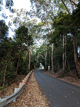 Berry Mountain. New South Wales.jpg