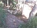 Bica d'água - panoramio.jpg