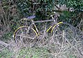 Bicycle in hedge - geograph.org.uk - 326685.jpg