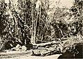 Big game shooting on the equator (1908 (1907)) (20361411752).jpg