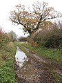 Big puddles on the track - geograph.org.uk - 1060455.jpg