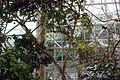 Biosphere 2015 01 18 0314.jpg