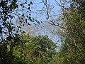Bird Great Hornbill Buceros bicornis at nest DSCN9018 23.jpg