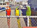 Birds VGA256.png