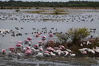 Birds at Merritt Island NWR.jpg