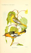 Birds of California in relation to the fruit industry (1910) (19763452793).jpg