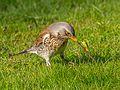 Birds of Sweden 2016 32.jpg