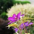 Blühe (41815036).jpeg