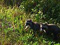 Black Point Wildlife Drive - Flickr - Rusty Clark (13).jpg