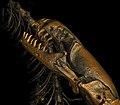 Blanus skull by Nick Longrich.jpg