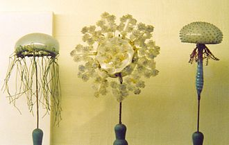 Leopold and Rudolf Blaschka - Blaschka model of jellyfish