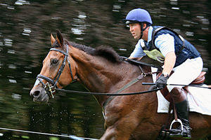 Cross-country equestrianism - Horses must be exceptionally fit to compete at the higher levels