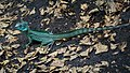Blijdorp Reptile (41537571450).jpg