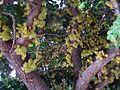 Blooming Karupia.jpg