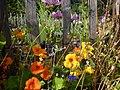 Blumen am Gartenzaun – Arboretum Ellerhoop 3.jpg