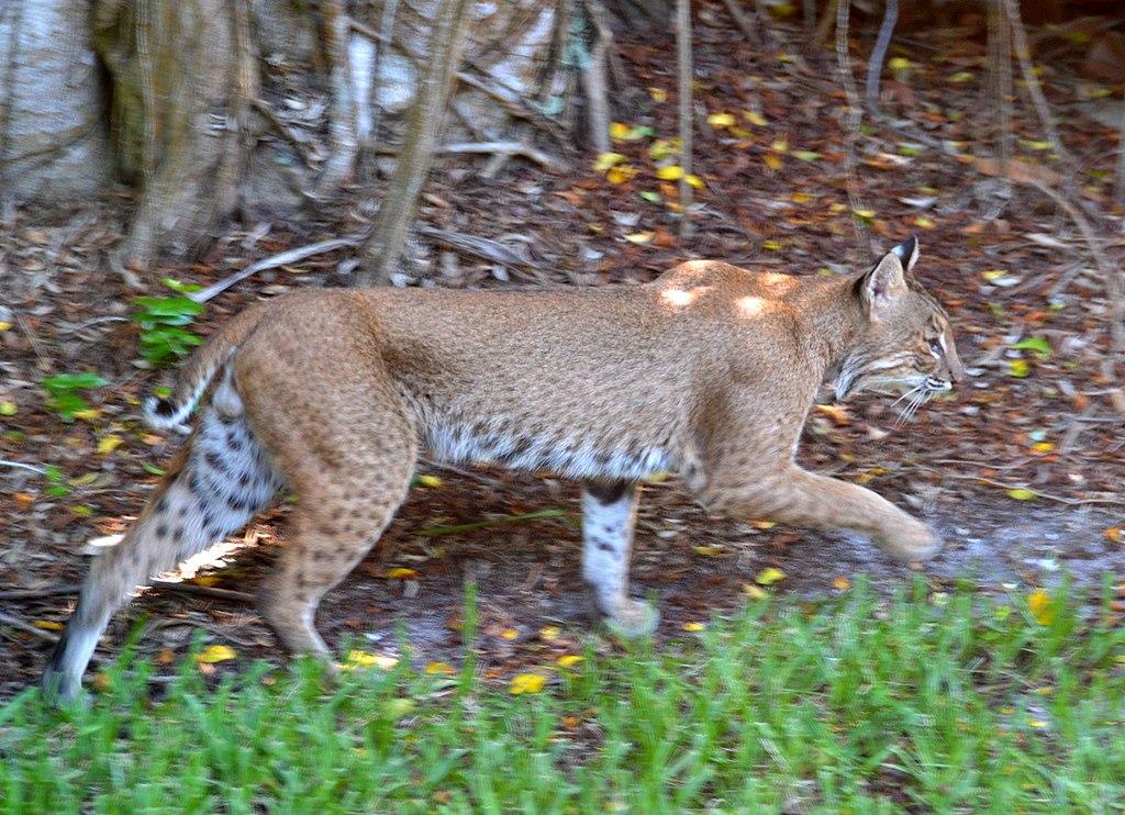 Sanibel Island Florida Weekly Rentals