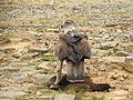 Bonellis Eagle kill DSCN8964.jpg