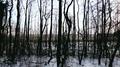 Borgwallsee 01-12-2010 476.png