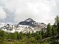 Bosco di larici e cima del Pizzo Scalino (3.323 m s.l.m.) Valmalenco, Sondrio, Lombardia, Italy. 2018-06-09.jpg