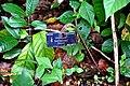 Botanic garden limbe19.jpg