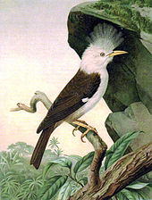 Painting of brown-and-white, crested bird with a long beak, on a branch under an overhanging rock