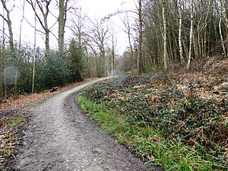 Brenchley Wood