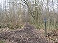 Bridleway junction in Whitehill Wood - geograph.org.uk - 1779475.jpg
