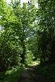 Bridleway through Wissett's Wood, Shakenhurst - geograph.org.uk - 464440.jpg