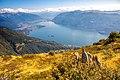 Brissago Islands and Lago Maggiore.jpg