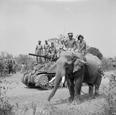 Sherman tank of the 9th Royal Deccan Horse, 255th Indian Tank Brigade, Burma 1945 British commander and Indian crew encounter elephant near Meiktila 2.jpg