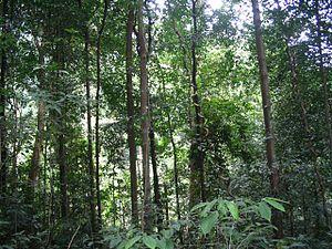 Bukit Timah Nature Reserve History