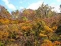 Burning Autumn - panoramio.jpg