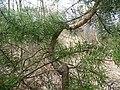 Byłem na Wilczych Ługach małymi krokami idzie wiosna 06 - panoramio.jpg