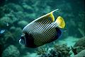 CSIRO ScienceImage 2879 Tropical Reef Fish.jpg