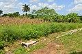 CUBA - panoramio (33).jpg