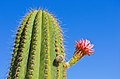 Cactus GardenSD2.jpg