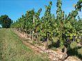Cahors 2011 08 021.jpg