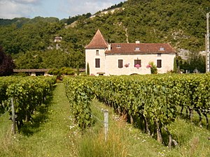 Cahors wine - A vineyard in Cahors