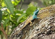 Image result for keibul lamjao national park images