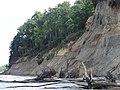 Calvert Cliffs at Calvert Cliffs State Park 18.jpg