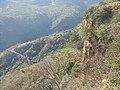 Camino Al Santiago - panoramio.jpg