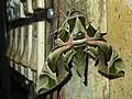 Camouflaged Moth.jpg