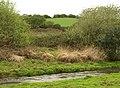 Carnon River - geograph.org.uk - 1288910.jpg