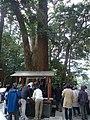 Cash-cow, money tree, Kunōzan Tōshō-gū.jpg