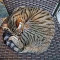 Cat ball n1.jpg