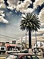 Centro, Apizaco, Tlax., Mexico - panoramio (2).jpg