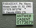 Cephalotes fiebrigi casent0173679 label 1.jpg